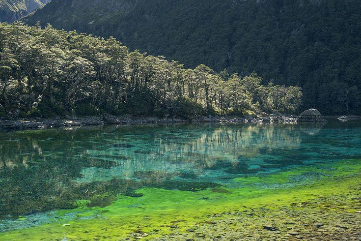 Rotomairewhenua - Fotos: Divulgação/ Tourism New Zealand (Fonte: Catraca Livre - Mais em https://catracalivre.com.br/viagem/mundo-viagem/indicacao/lago-da-nova-zelandia-e-considerado-o-mais-cristalino-do-mundo/)