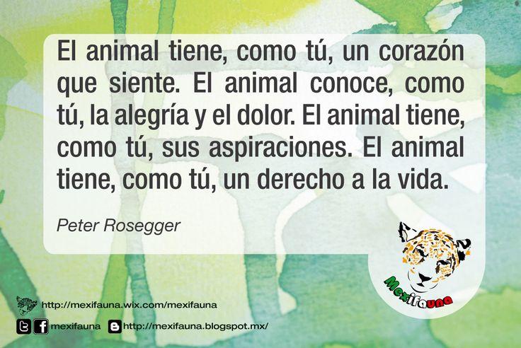 El animal tiene, como tú, un corazón que siente...