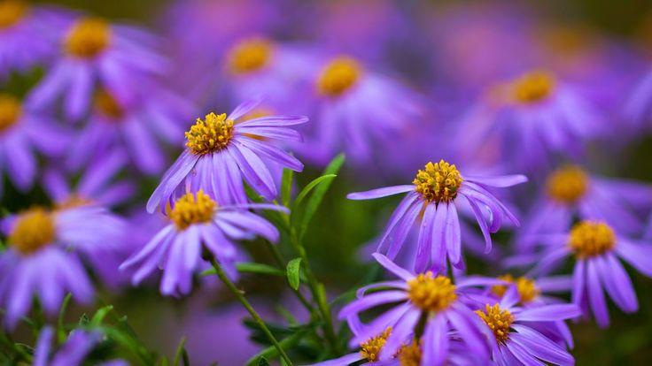 10 Gambar Bunga Warna Purple Ungu Violet Top Wallpapers Pinterest