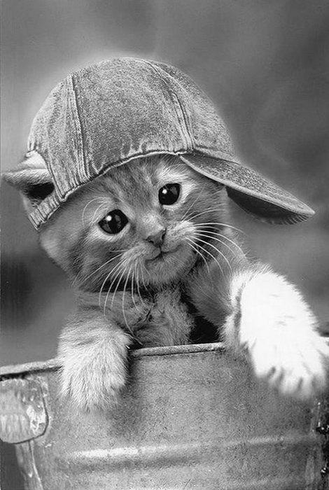 . cat cute ✔ BWC