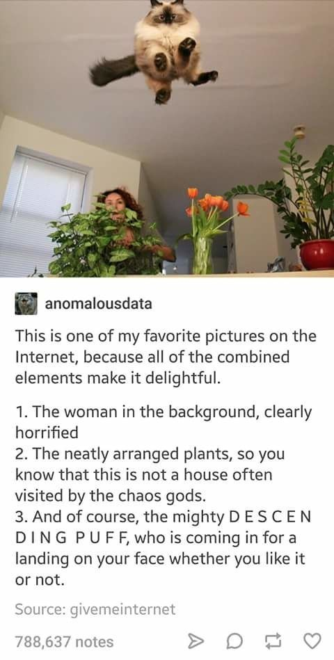 17 Tumblr Posts That Are So Dumb But So Funny
