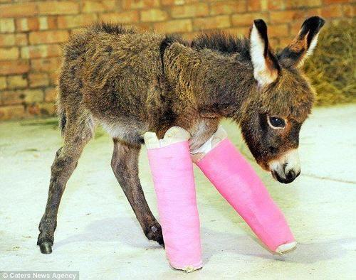 broken legs | Tumblr **Aww. poor little pookie noop ** <3