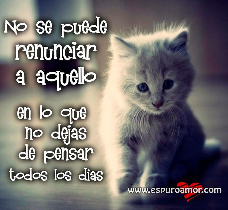 Cartel con frase de amor para facebook de un gatito que no deja de pensar en su gatita - http://espuroamor.com/2014/02/cartel-con-frase-de-amor-para-facebook-de-un-gatito-que-no-deja-de-pensar-en-su-gatita.html #Imagenesdeamor, #Imagenesdedesamor