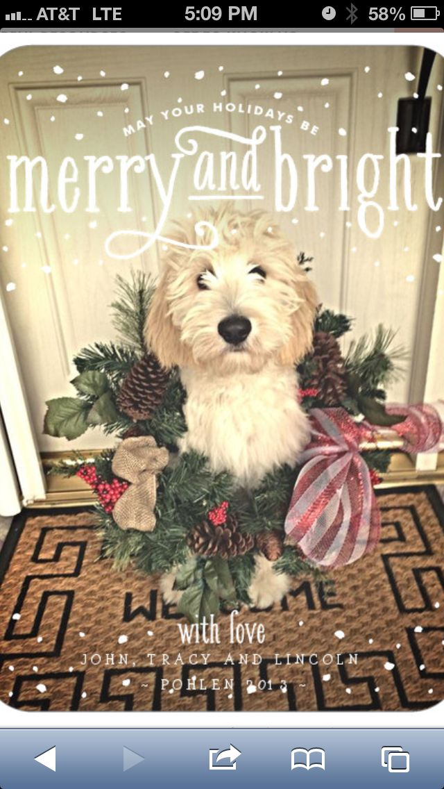 Our Christmas Card... #goldendoodle #dogchristmascard