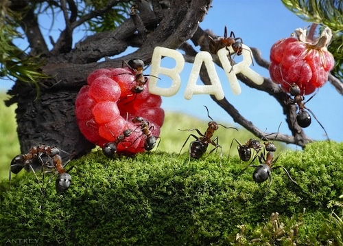 Amazing Life of Ants by Andrey Pavlov