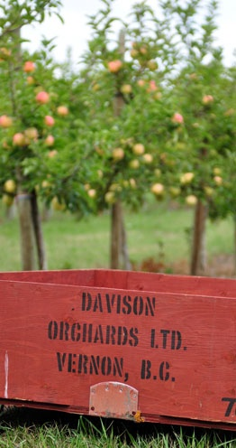 Davison Orchards - multi generations farm & tourist attraction - great place to get apples !