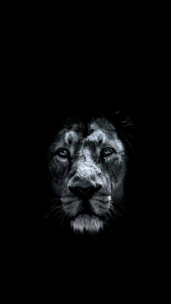 Lion Wallpaper 4k Iphone X Ideas In 2020 Lion Hd Wallpaper Lion Wallpaper Animal Wallpaper