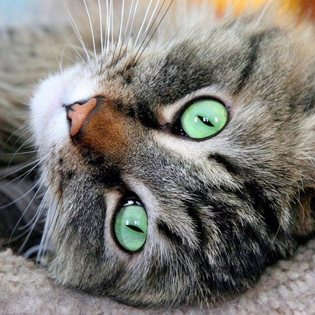 El próximo domingo tendremos Domingatos de 11am a 3:30pm en CVP. Y a la 1 pm no te pierdas la charla sobre salud felina