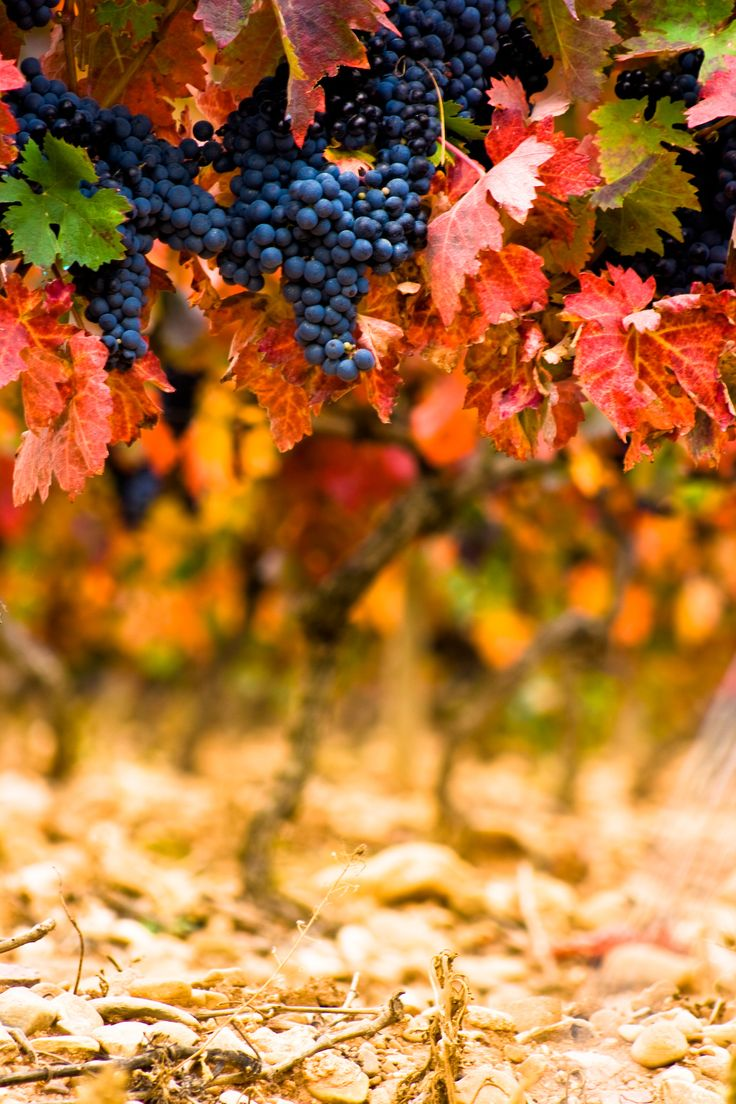 R is for Rioja, or La Rioja, a region of Spain not to be missed. Dotted with picturesque vinyards, the rioja wine from this region is so special even a minor planet is named after it (209083 Rioja is it's name)