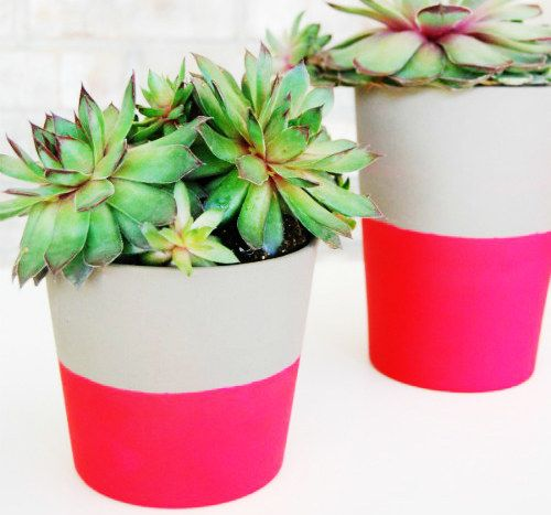 Color blocked flower pots. Make your succulents prettier.