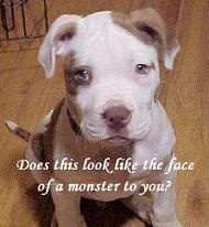 save the pitbulls!
