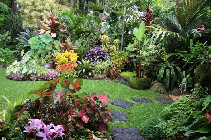 M s de 1000 ideas sobre jardines tropicales en pinterest - Plantas tropicales para jardin ...