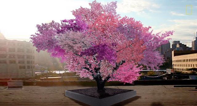 This Single Tree Is Growing 40 Different Types of Fruit