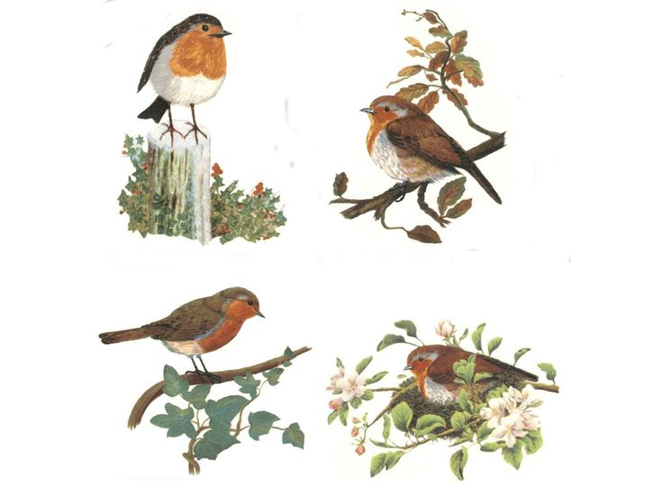 "Wonderful robins...on a post, on branches in a nest. Order # Size # of Decals on Sheet Sheet Price 80707A/1 7 1/2"" 4 $ 18.50 80707A/2 6"" 4 $ 8.50 80707A/3 4 1/2"" 4 $ 7.50 80707A/4 3 1/2"" 4 $ 6.00 8070"