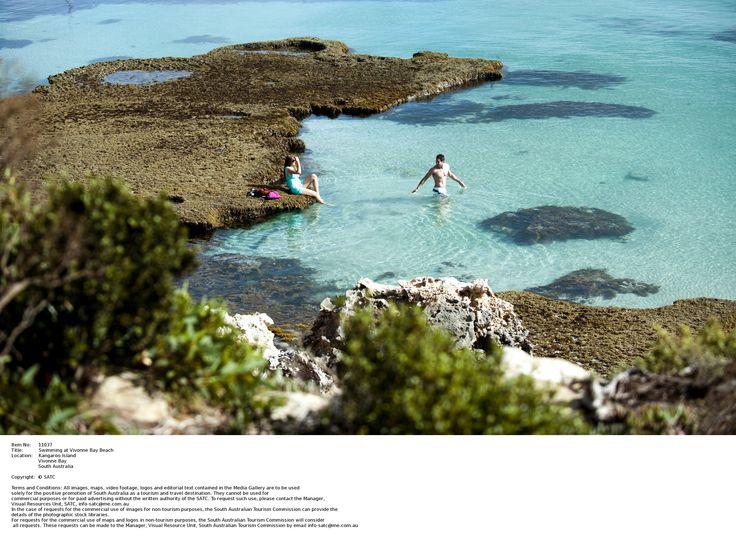 Este fin de semana queremos acercarte a Kangaroo Island, un protegido refugio para los canguros, koalas, pingüinos, focas, equidnas y otras especies. ¡En esta increíble isla parece como si el tiempo no hubiera pasado! www.holaaustralia.com