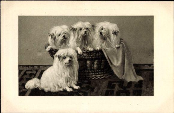 Vier Hunde Spitze, Weidenkorb, Schoßhunde, Schleifen im Haar