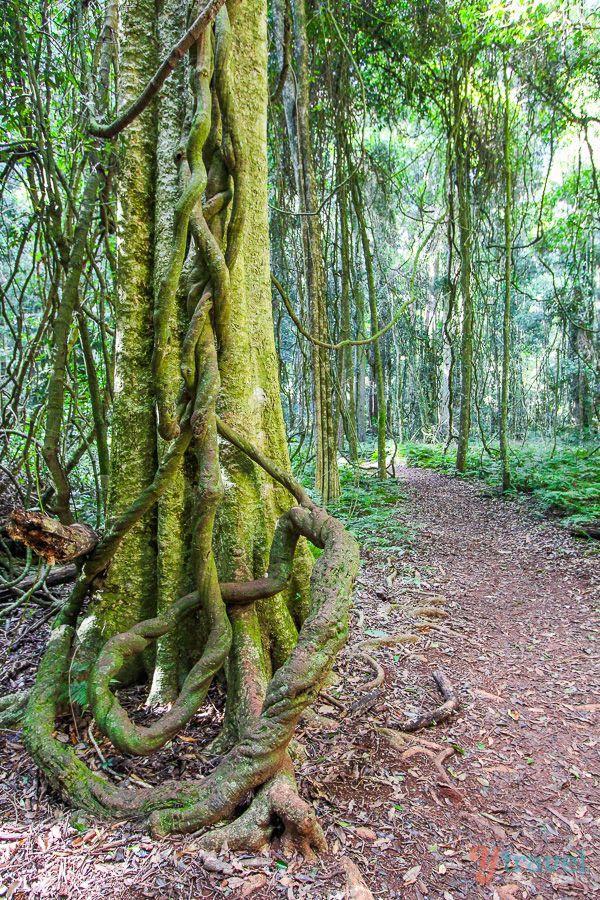 Go hiking in The Bunya Mountains in Queensland, Australia