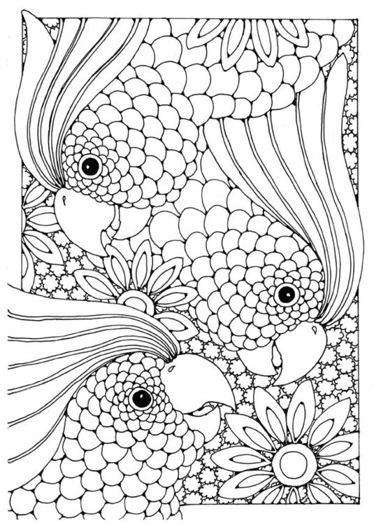 Cockatoo Bird Adult Colouring Page