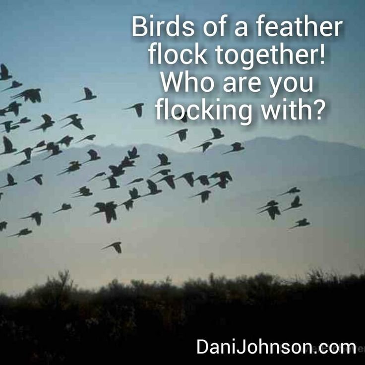 birds of different feathers flock together meet