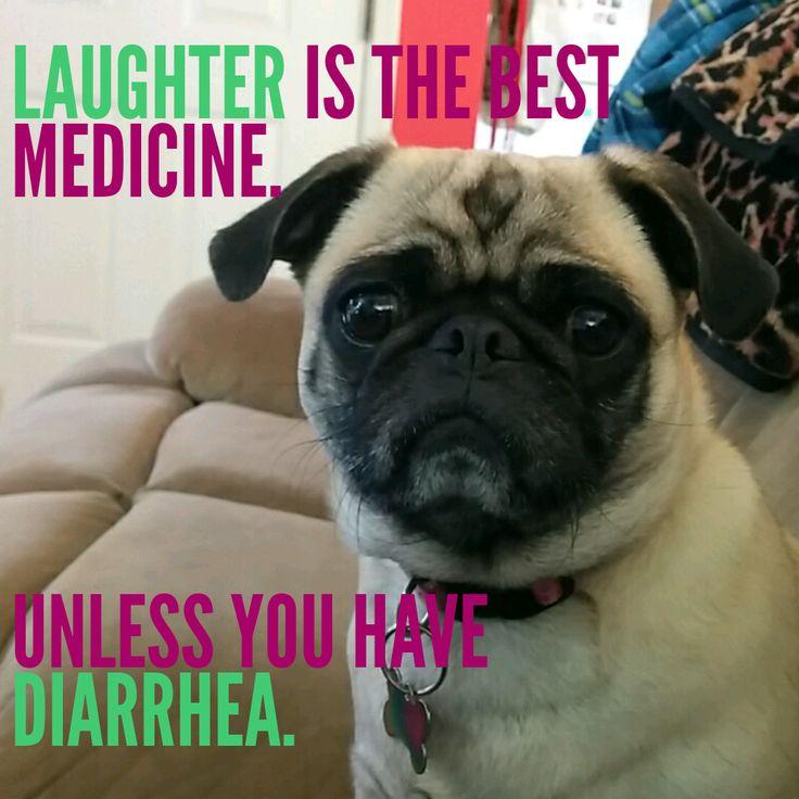 gross pugs Pugs Pinterest The o'jays, Pug and Haha