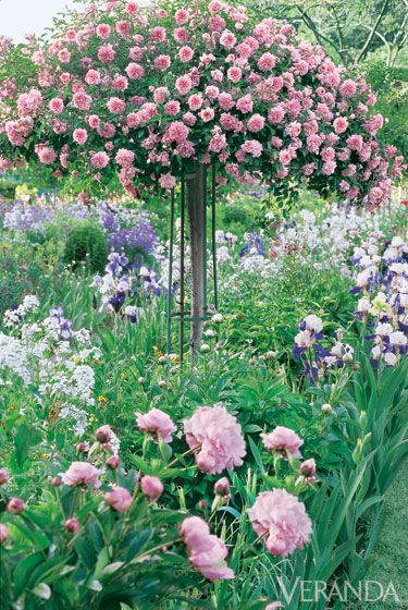 Standard Rose, Poppies And Peonies   Monets Garden Inspiration In Giverny.  Photo Jacques Dirand