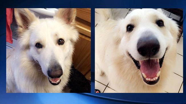 RIP HOGAN (4 yrs old) - JULY 2017 - Dog dies from suspected heat exhaustion moments after hiking favorite California trail - https://petrescuereport.com/2017/dog-dies-suspected-heat-exhaustion-moments-hiking-favorite-california-trail/