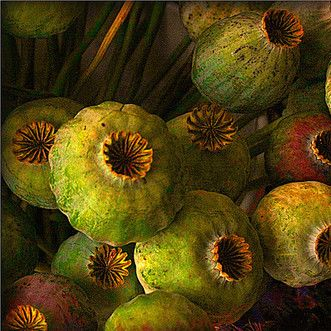 """seed pods"" Beautiful... beautiful... beautiful. Love the colours,  the shapes, the shadows, love everything about this image. S."