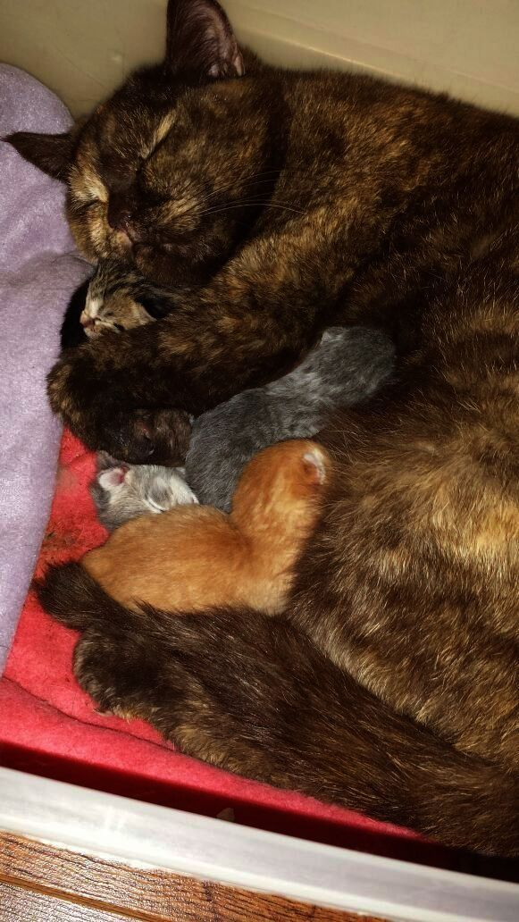 Check this out >> Cats And Kittens For Sale Brisbane