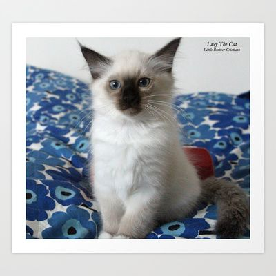 Lucy The Cat products in Society6