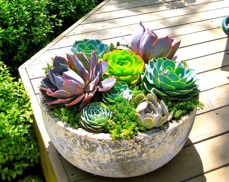 piante grasse in vaso