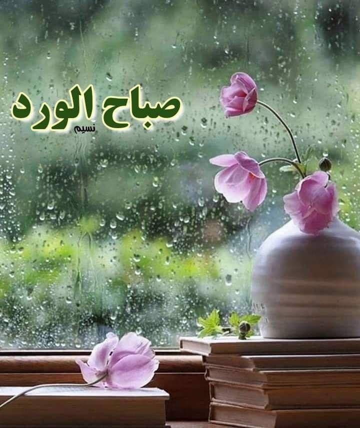 صباح الخير لقطرات المطر التى تداعب القلوب للضوء الذي يتسلل على استحياء ليخبرنا أن مازال أمامنا متسع للحياه بكل ماف Tarot Daily Tarot Tarot Cards