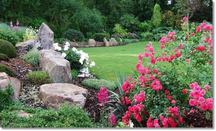 Elmshorn różowe róże parkowe