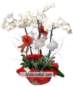 Vip Orkide & Güller  285,00tl + kdv    http://www.hizlicicekal.com/cicekler/cicekciler/cicek/121/vip-orkide--guller/