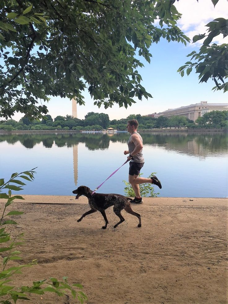 Running with my Dog | Runner with Reiselust #runningdog #gsp #germanshorthairedpointer #runner #runningbuddy