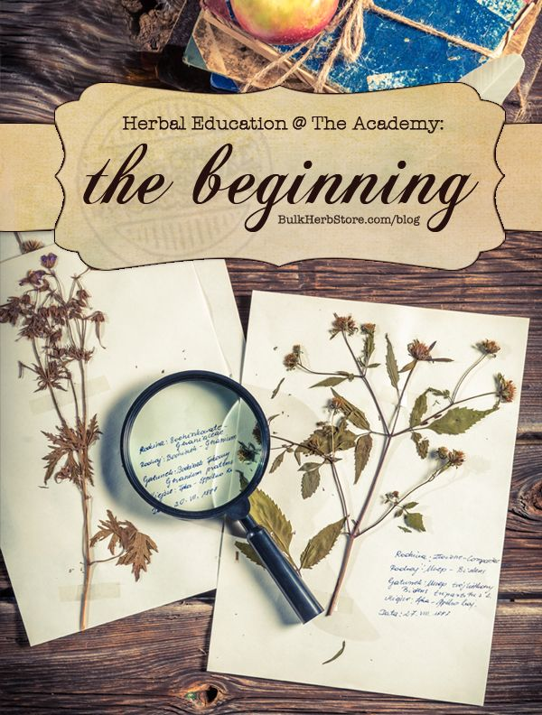 Herbal Education At The Academy: The Beginning | Growing Up Herbal | Come follow along and get a glimpse of what an herbal education is like with HANE!