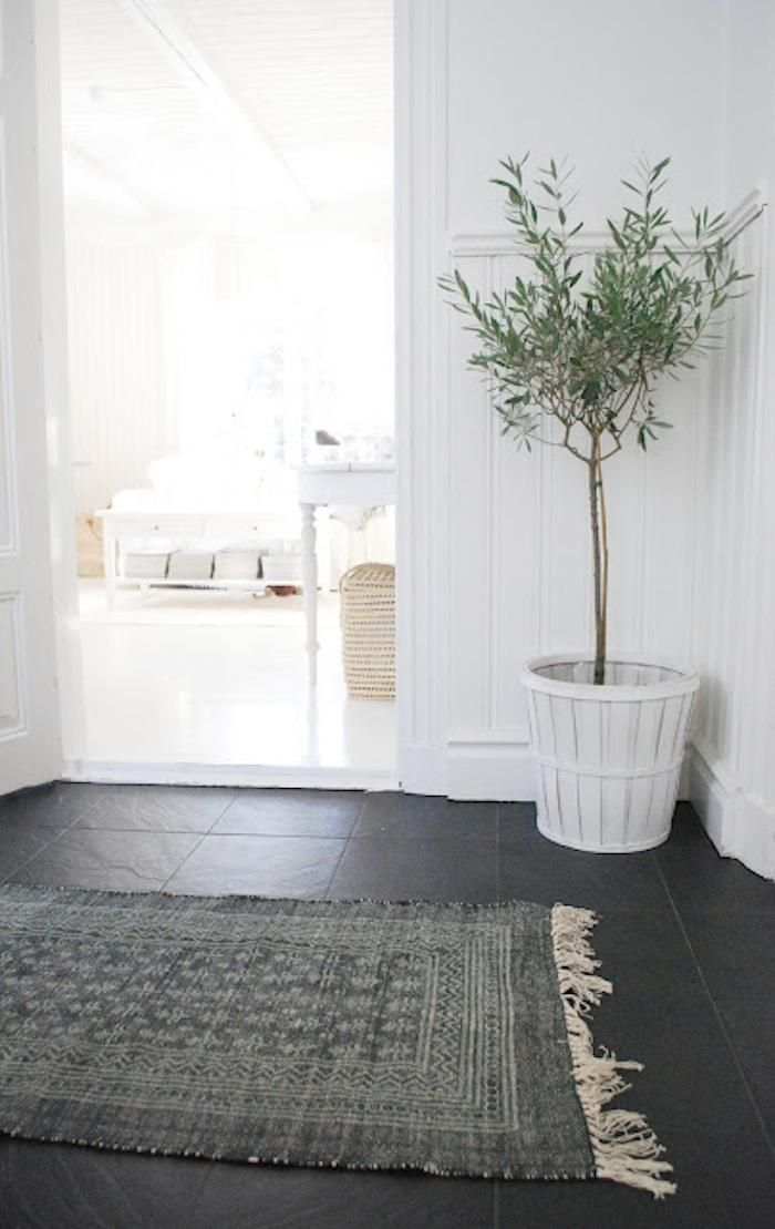 potted olive tree and rug