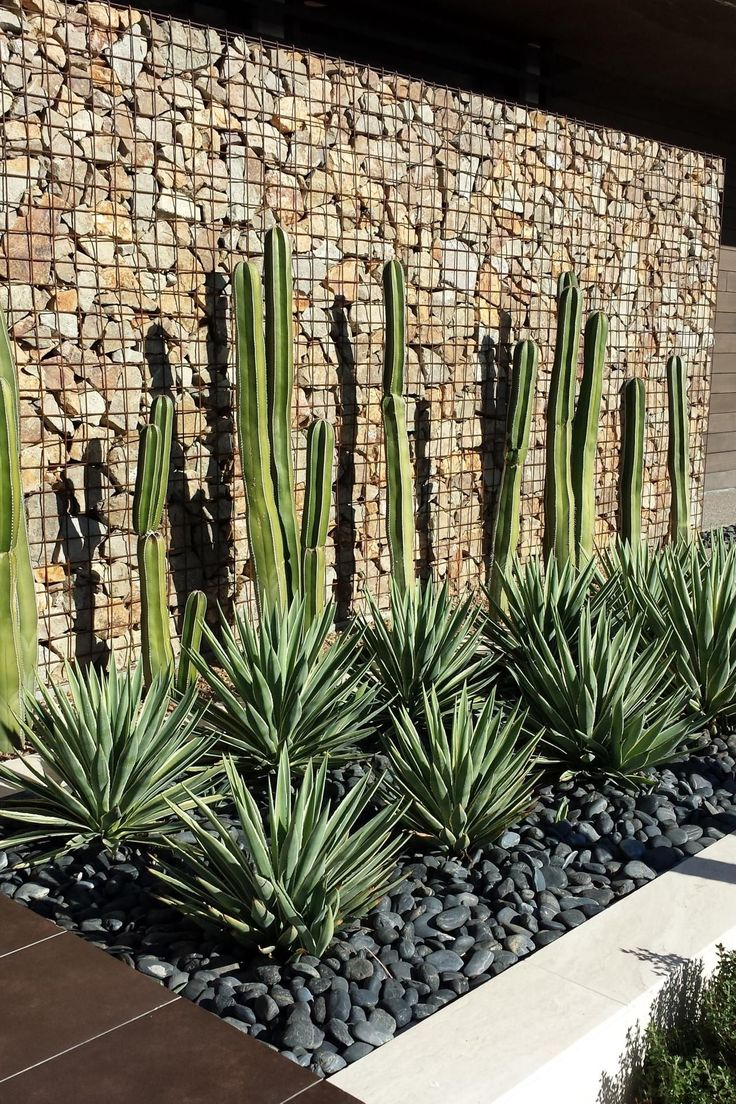 This gabion wall was installed in the back of the garden to help prevent erosion in the dry climate. The cacti and the yucca plants give the wall a pop of color, while the grey stones in the flower beds add an elegant touch to this desert landscape.
