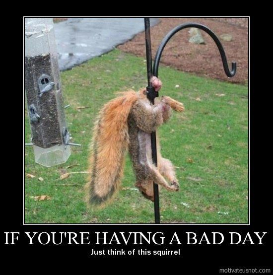 if you re having a bad day just think of this squirrel