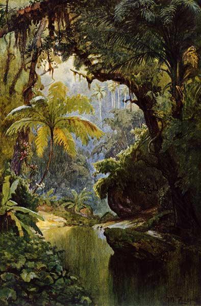 Brasilianischer Urwald - Max Zaeper als Kunstdruck oder handgemaltes Gemälde.