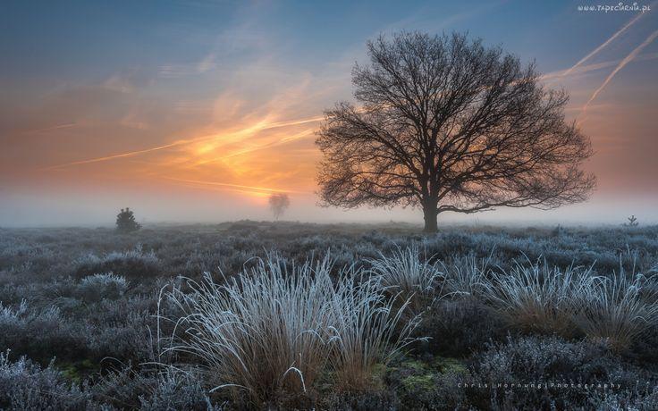 Wschód, Słońca, Drzewo, Trawa, Szron, Mgła