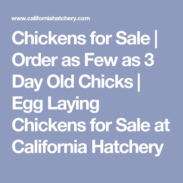 Chickens for Sale | Order as Few as 3 Day Old Chicks | Egg Laying Chickens for Sale at California Hatchery