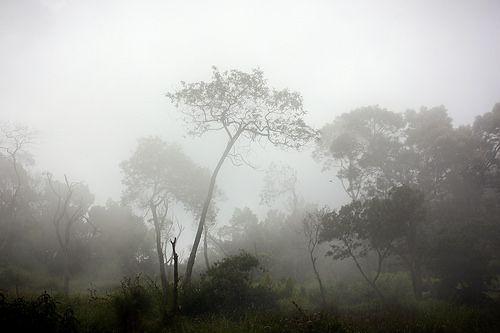 Mist in Merbabu