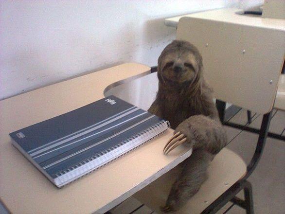 Me a school :D