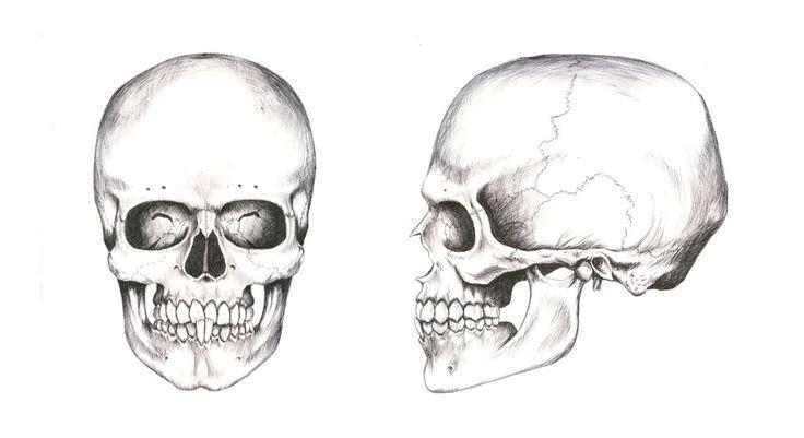 En este dibujo podemos ver dos calaveras, una de frente y otra de ...