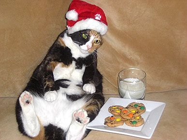 Santa could have the cookies, but Chloe wasn't going to let him have the milk.