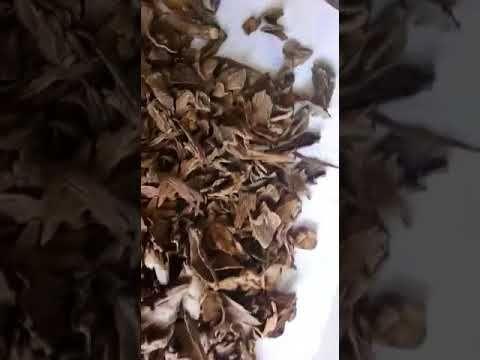 Wild Sumbawa Agarwood chips AB Grade