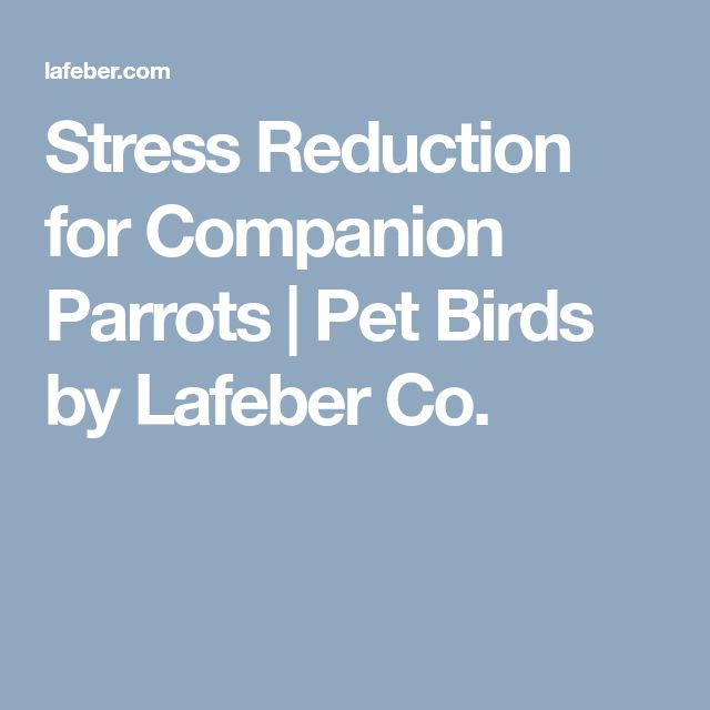 Stress Reduction for Companion Parrots | Pet Birds by Lafeber Co.