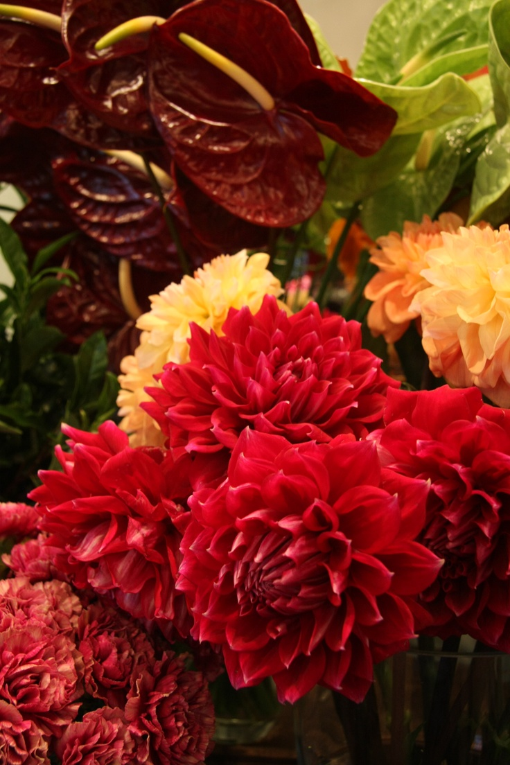 Autumn display at florist. With dahlia and anthurium