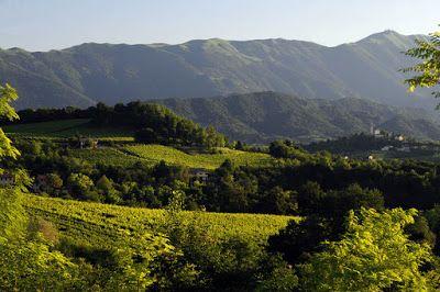 Stefano Armellin The Opera: UNESCO - VENETO, l'Arte del vino e  il vino dell'A...