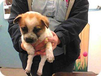 Dogs For Adoption In Albuquerque New Mexico